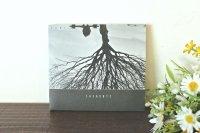 ラトビア音楽CD Zari - Sazaroti